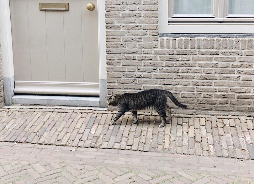 オランダ猫