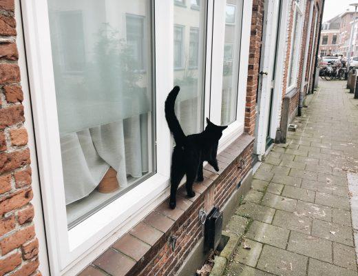オランダ黒猫